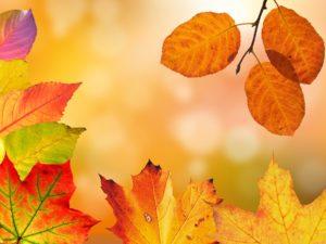 autumn-1649362_1280 (1)